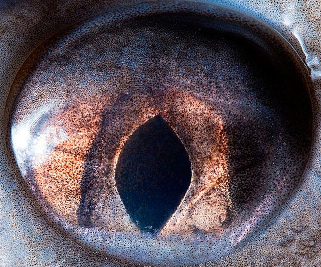 Olho de Esturjão