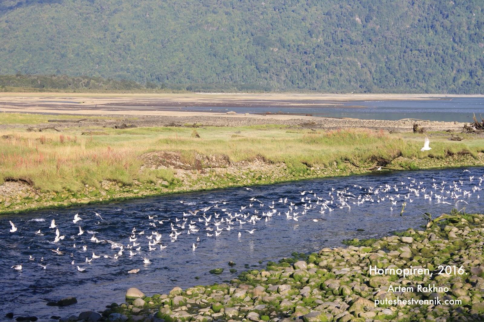 Птицы на реке в Чили