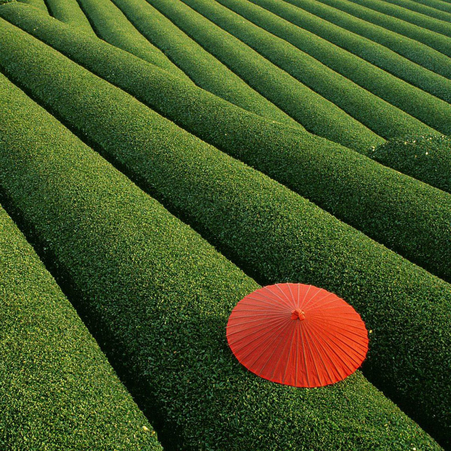 China, Fields of Tea