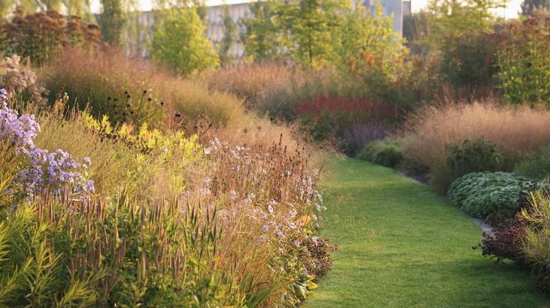 Plantas que dan color al oto o jard n comunitario vlinderhof for Jardin 7 colores bernal