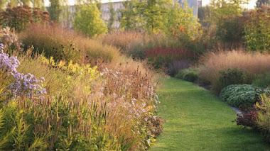 Plantas que dan color al otoño. Jardín comunitario Vlinderhof