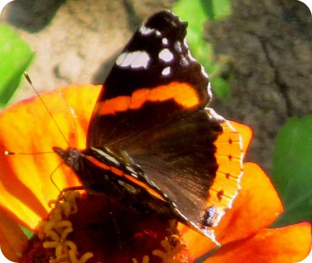 Moje Zaczytanie Sobota Z Poezją Motyl Wandy Chotomskiej