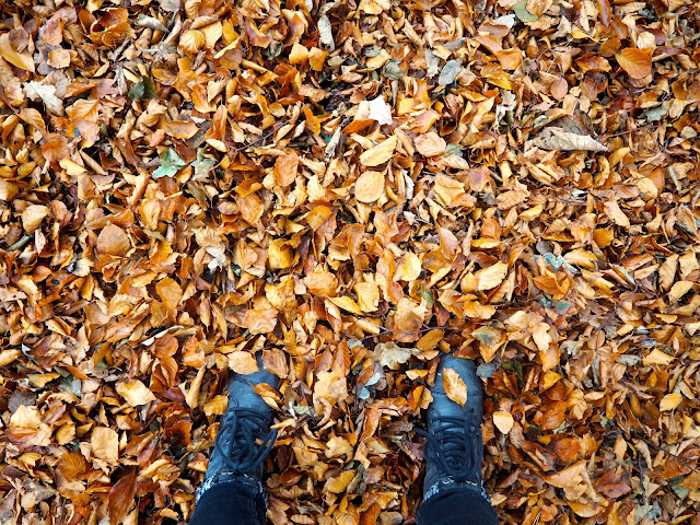 Autumn leaves underfoot on Corstorphine Hill, Edinburgh, Scotland