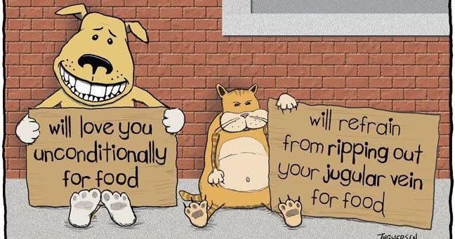 Cat Vs Dog Carton