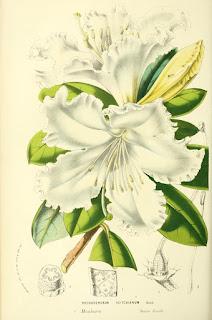 Free Botanical illustration books.  Read online or download.