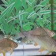 All About Aquarium Fish: Tropical Freshwater Barbs