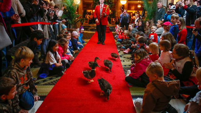 The Peabody Ducks na International Drive em Orlando