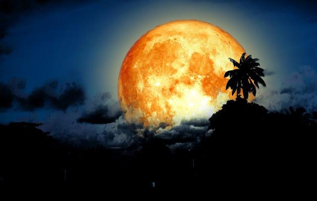 Chúng Ta đã biết về Trăng Máu vậy còn  Mặt trăng Cá Tầm là gì