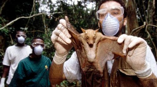 Ebola bat