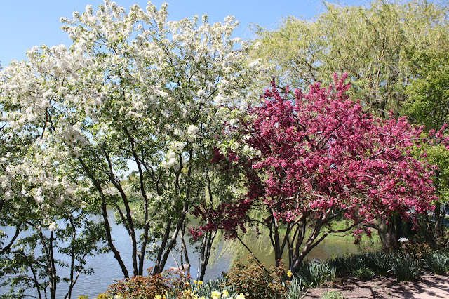 Trees blooming at Chicago Botanic Garden