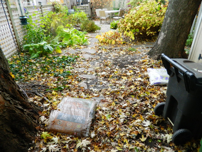 Leslieville Toronto Backyard Garden Fall Cleanup Before