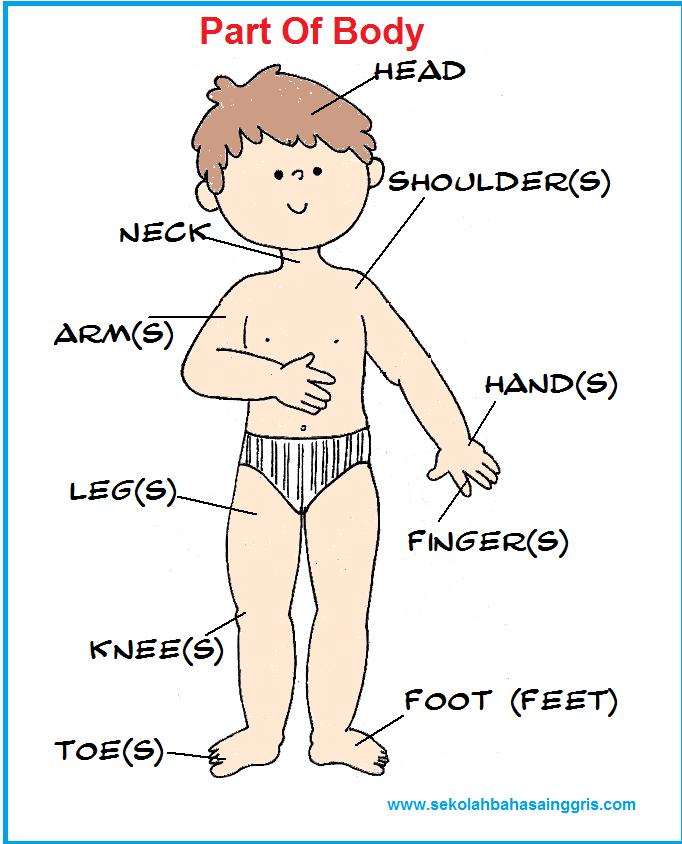 body parts of america - 582×731