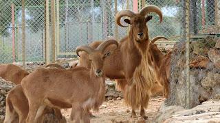 كتابة موضوع تعبير عن رحلة الى حديقة الحيوان
