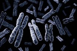 Pengertian, Struktur, dan Fungsi Kromosom
