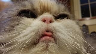 Winston Cat Food