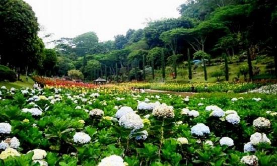Pemandangan Taman Bunga yang Indah di Selecta Kota Batu