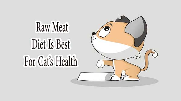 Raw Meat Diet Is Best For Cat's Health