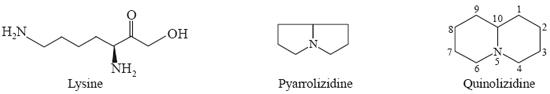 Lysine Pyarrolizidine Quinolizidine