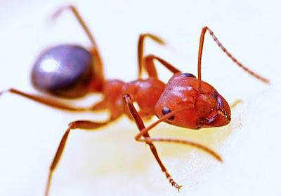 Tips Mengusir Semut Pada Kabin Mobil