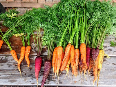 Gaajar khane ke fayede(Benefits of carrot)