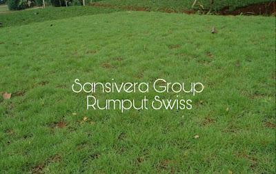 Jual Rumput Swiss Harga Murah
