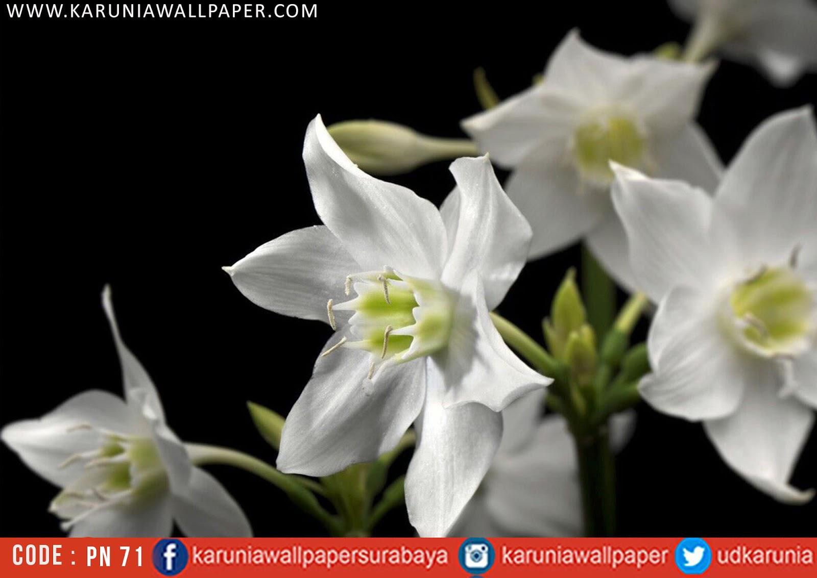 jual photowall bunga
