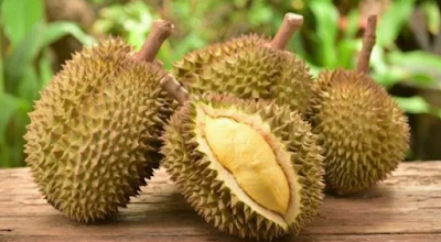 9 Manfaat Buah Durian Bagi Kesehatan tubuh