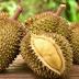 9 Manfaat Buah Durian Bagi Kesehatan Yang Harus Anda Ketahui