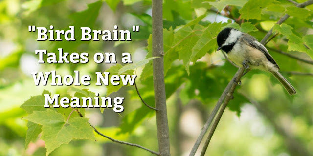 Starting with some incredible facts about the brain of a chickadee, this 1-minute devotion offers 5 ways God helps us overcome bad memories. #Bible #BibleLoveNotes