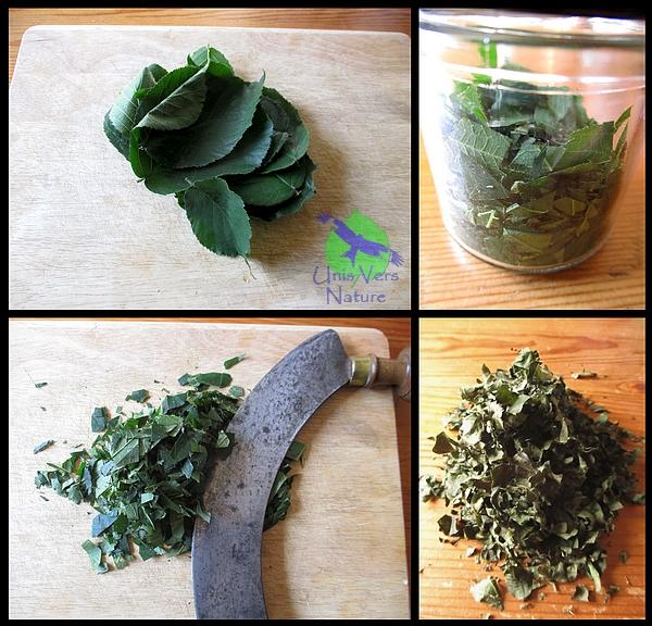 thé de ronce, fabrication