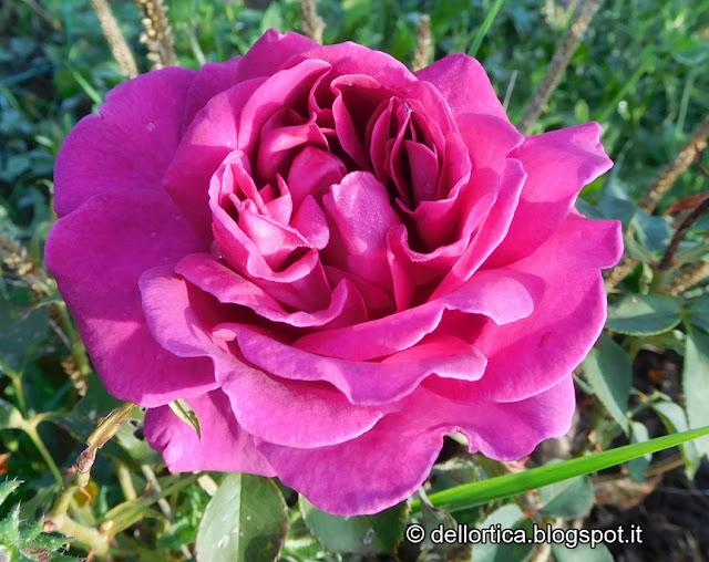 Erbe aromatiche flora spontanea fauna selvatica ghirlande composizioni di fiori secchi sali aromatici confetture di rosa gelatina di tarassaco e altro alla fattoria didattica dell'ortica
