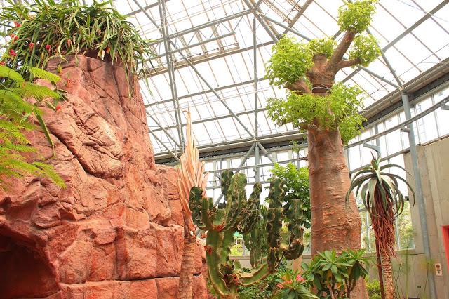 山口県、宇部市のときわ公園の植物園がリニューアルしたよ【Y】 プラントハンター西畠清順、世界を旅する植物館  アフリカゾーン 、日本最大級のバオバブの木