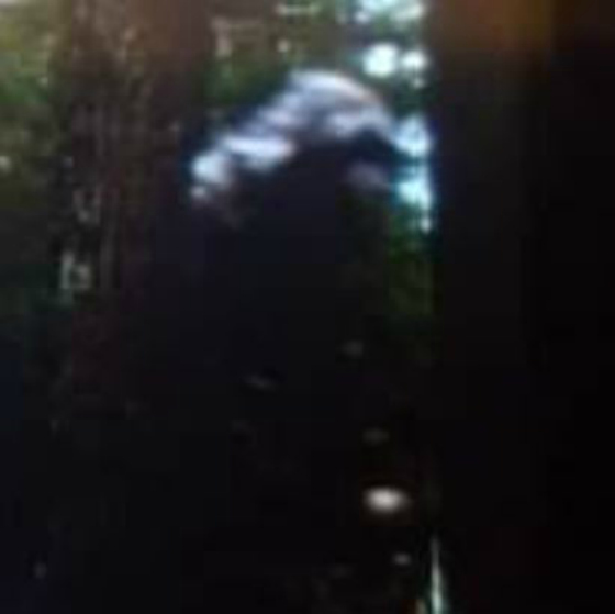 Photo: Bigfoot Captured on Trail Cam in North Georgia Mountains