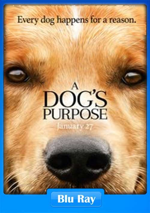 A Dogs Purpose 2017 480p BluRay 260MB x265 Poster