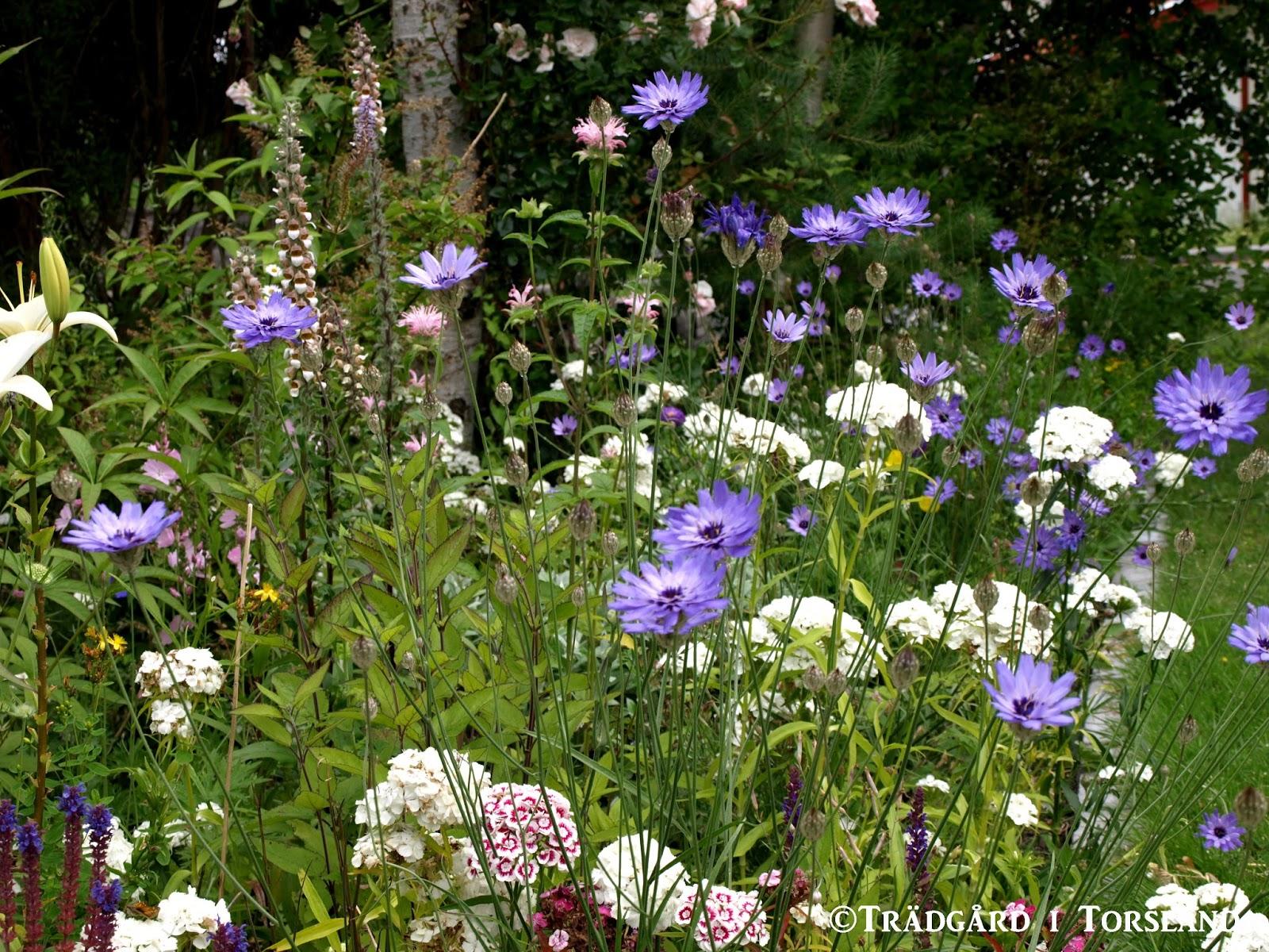Trädgård i torslanda: trädgårdens delar #2; långa perennarabatten