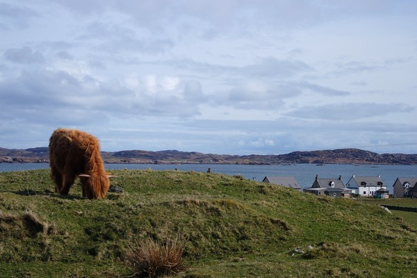 écosse highlands île mull iona