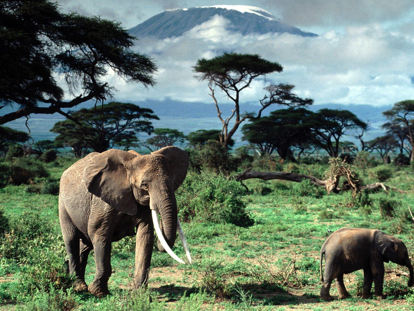 Best Safari Travel Insurance