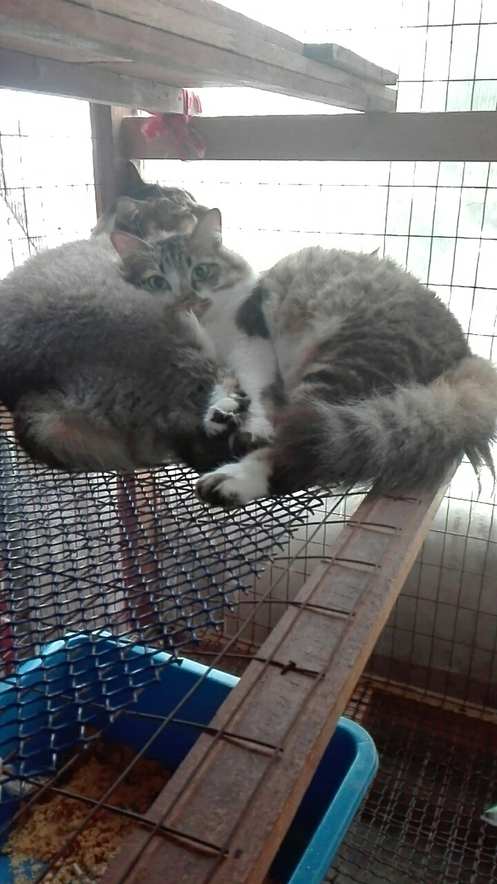 Royal Cat S Blog