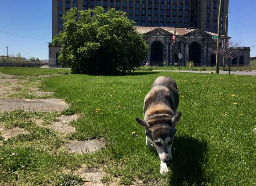 Dog Training In Maadi