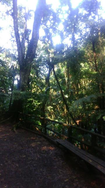 Floresta Ombrófila densa localizada na Trilha do Silêncio. Foto: Natasha Ceretti