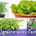 วิธีปลูกผักสวนครัว 10 ชนิดในกระถาง มีผักสด ๆ ไว้กินที่บ้านทุกวัน