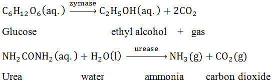 Enzyme Catalyst