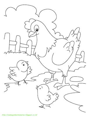 Gambar Mewarnai Ayam - 4
