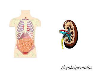Penyakit ginjal telah terdaftar dalam kategori penyakit yang umum dan mengancam jiwa