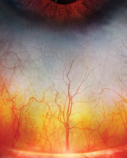 High Definition Photo Of The Blood Vessels In The Human Eye Look Eerily Like A Forest