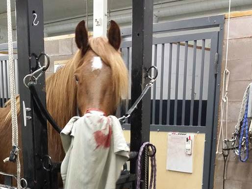Mitä maksaa hevosen sairastuminen