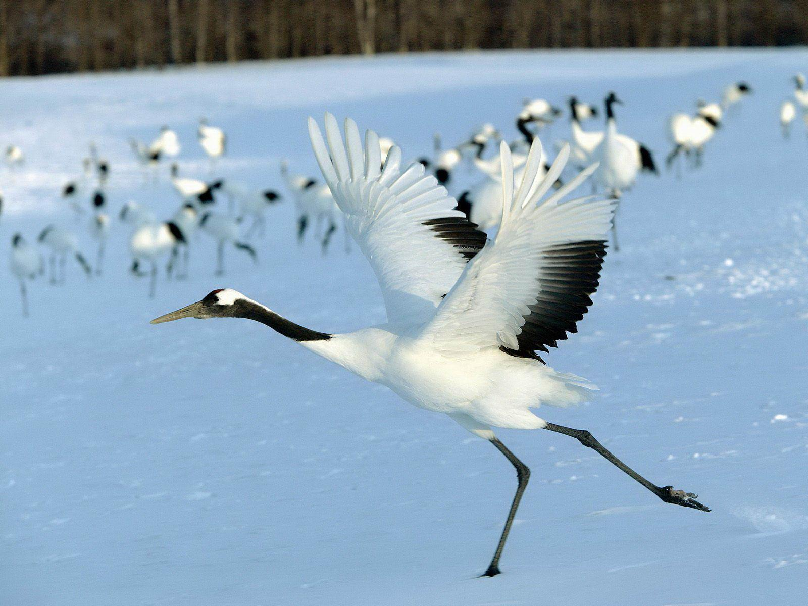 All About Animal Wildlife: Crane Bird Facts and Images-Photos