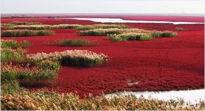 เรดบีช หาดสีแดงแห่งผานจิ่น (Panjin Red Beach)