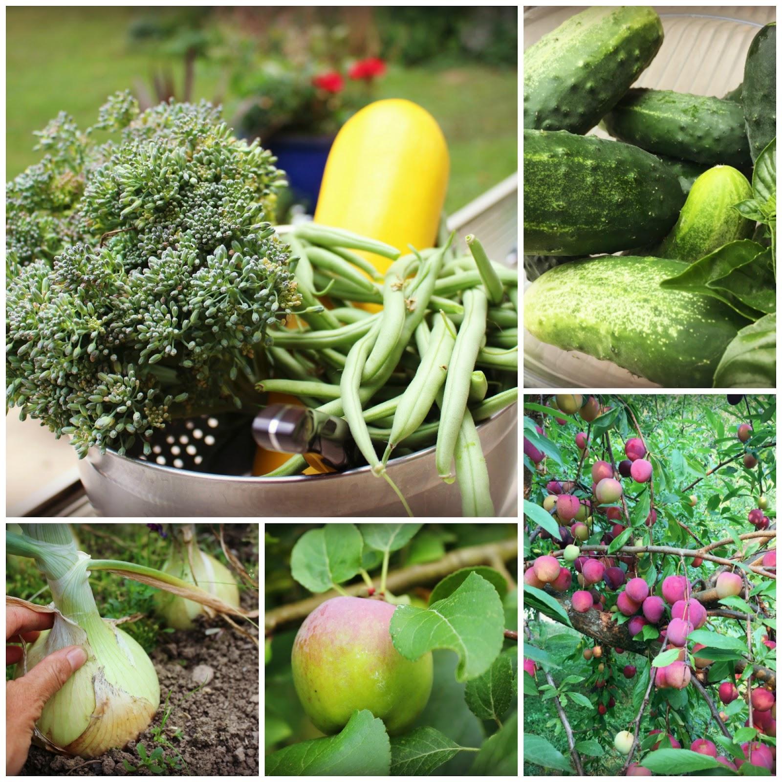 Marblemount homestead - Medicinal herbs harvest august dry store ...
