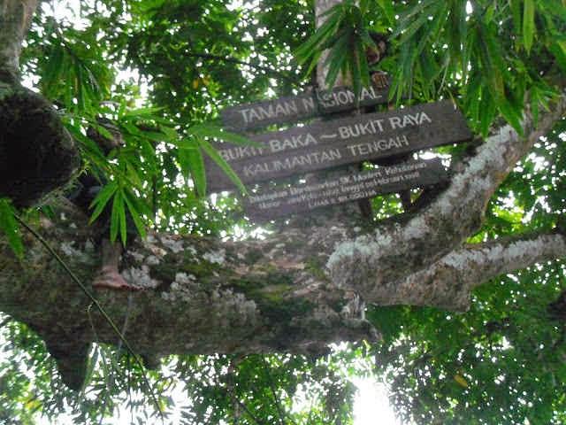 Taman Nasional Bukit Baka-Bukit Raya